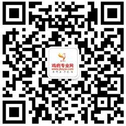 鸡病专业网微信二维码