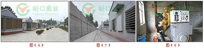 大规模饲养阶段鸡舍建设:存栏10万只以上