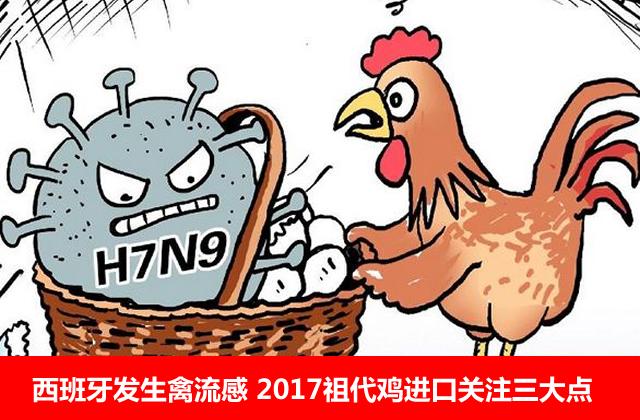 西班牙野禽发生高致病性禽流感 2017祖代鸡进口关注三大点