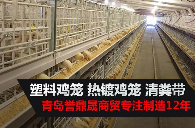 塑料鸡笼、热镀鸡笼、清粪带——青岛誉鼎晟商贸专业制造12年