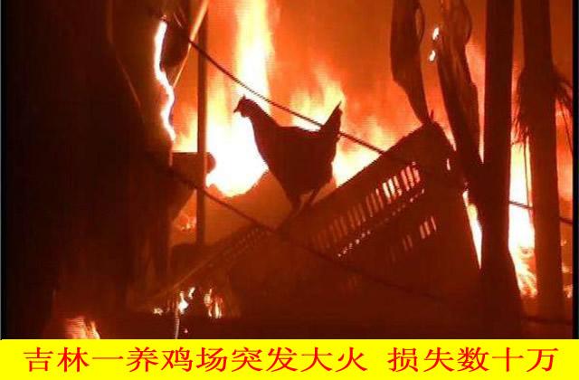 吉林养鸡场突发大火 现场鸡惨叫声不断,损失数十万