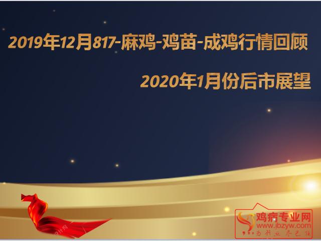 2019年817-麻鸡-成鸡-鸡苗12月份行情回顾与2020年1月份后市展望
