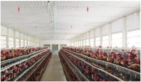 秋冬季节密闭式鸡舍的温度与通风管理要点