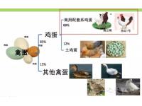 2017中国蛋鸡产业展望报告