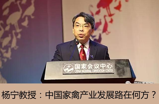 中国家禽产业发展路在何方?——专访世界家禽学会主席、中国农业大学教授杨