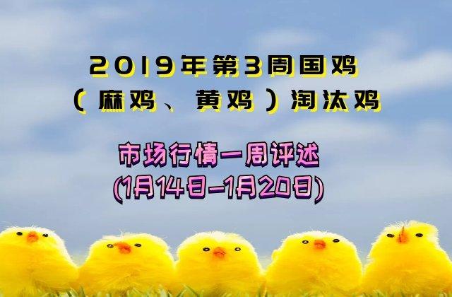 2019年第3周周国鸡(麻鸡、黄鸡)淘汰鸡市场行情一周评述暨前瞻(1月14日-1月20日