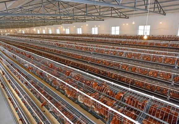 肉鸡产量恢复之际 或许就是蛋鸡行业血雨腥风之时!