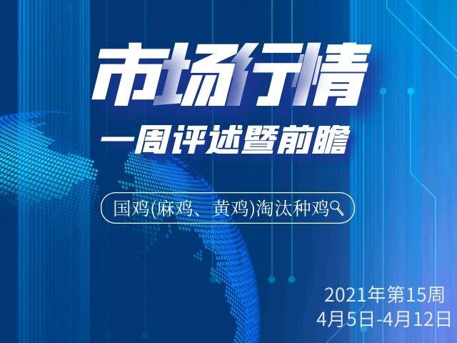 2021年第15周国鸡(麻鸡、黄鸡)淘汰种鸡社会市场行情一周评述暨前瞻(4月5日-11日