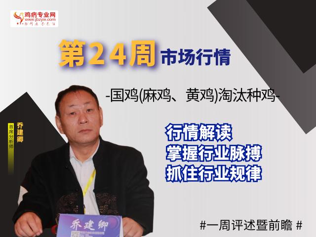 第24周国鸡(麻鸡、黄鸡)淘汰种鸡社会市场行情一周评述暨前瞻(6月7日-6月13日